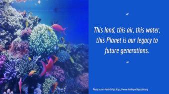 underwaterlife