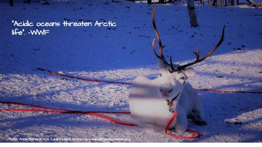Arctic (11)