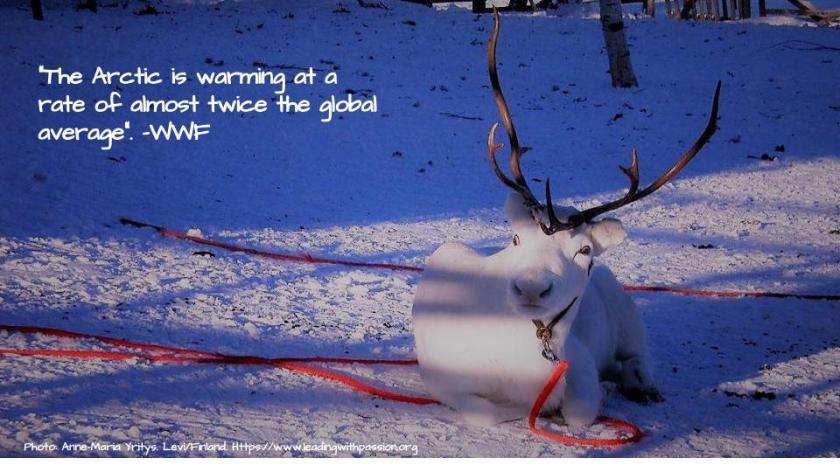 Arctic (2)