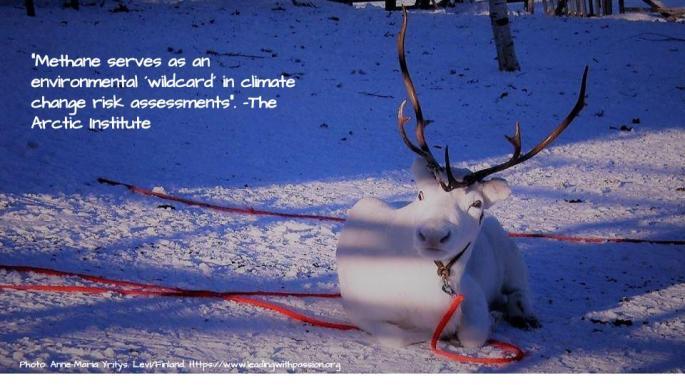 Arctic (30).jpg