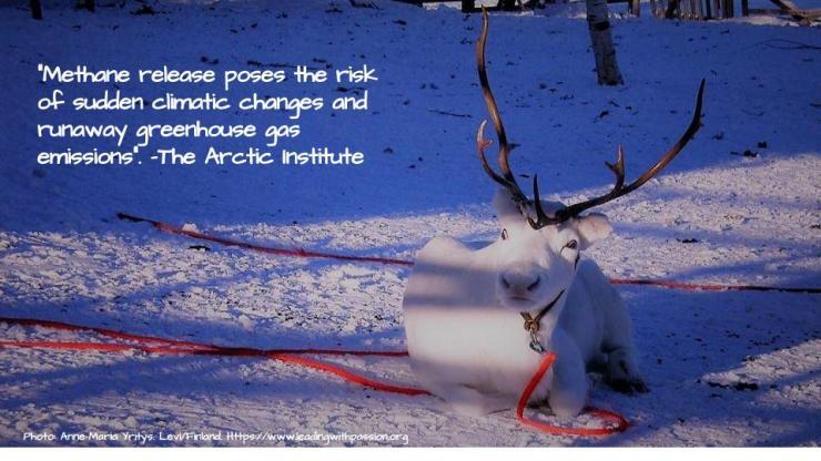 Arctic (32)