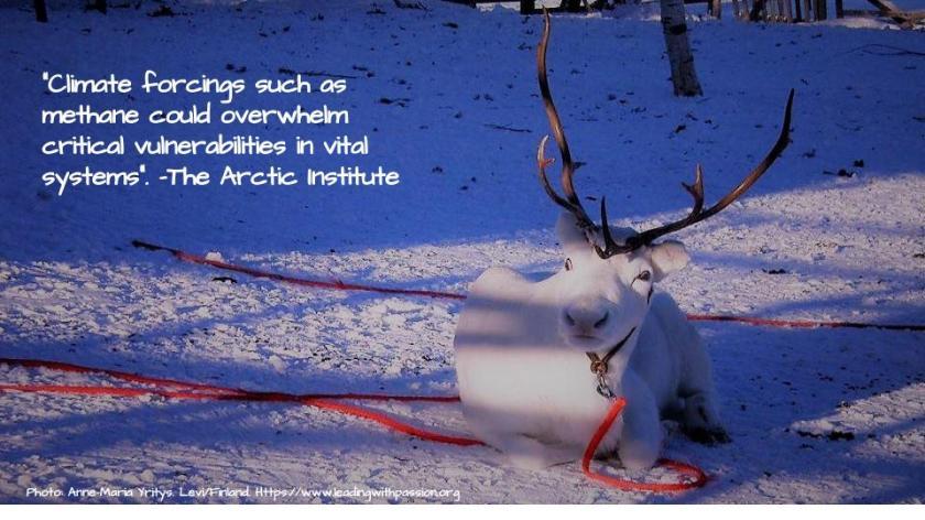 Arctic (33)