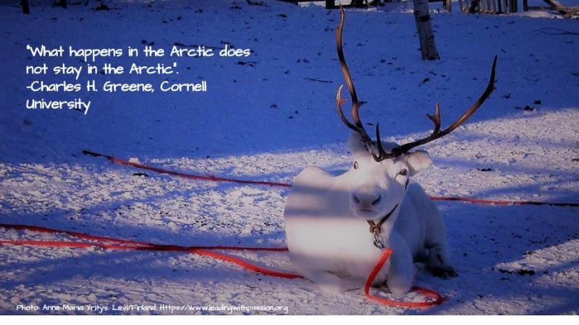 Arctic (34).jpg