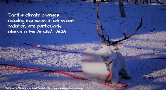 Arctic (35).jpg