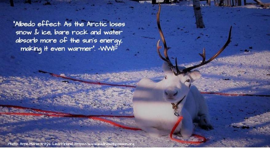 Arctic (4)