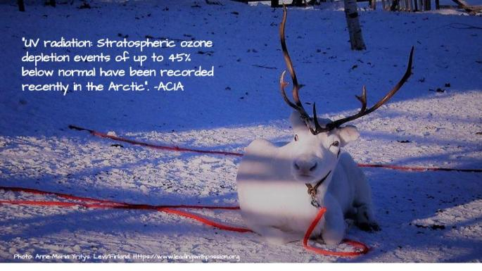 Arctic (42).jpg