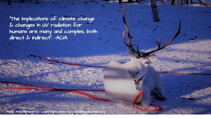 Arctic (44).jpg