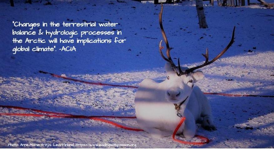 Arctic (45).jpg