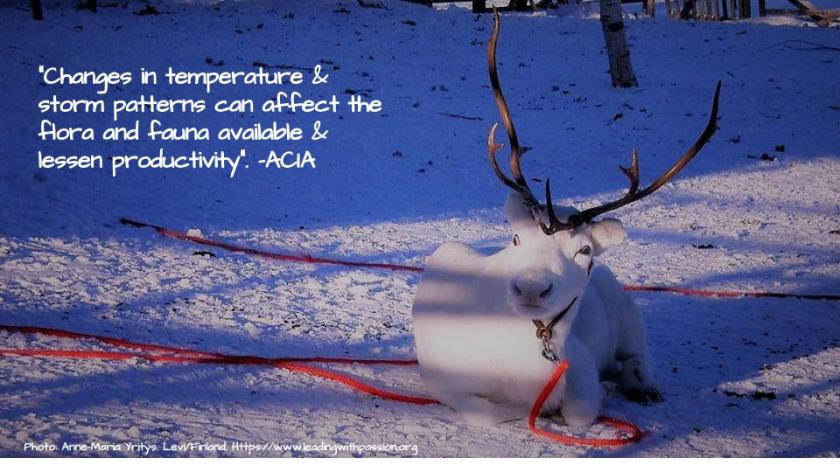 Arctic (48).jpg
