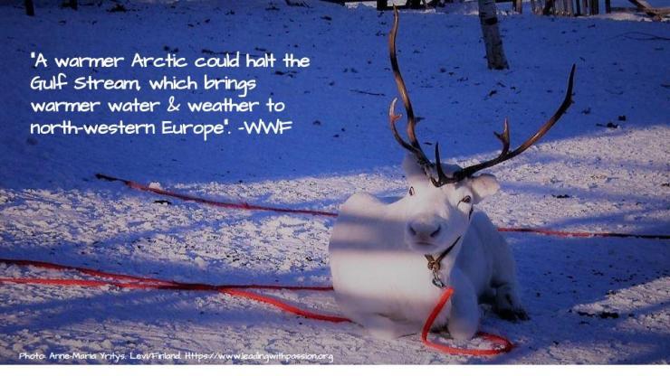 Arctic (9)